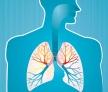 P10-Lungs-350x257-WEB